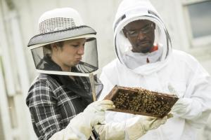 Bees and Beekeeping class